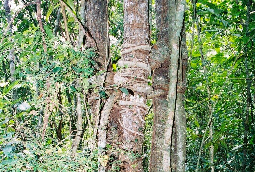Cada árbol parece tener personalidad propia. Foto: Pamy Rojas