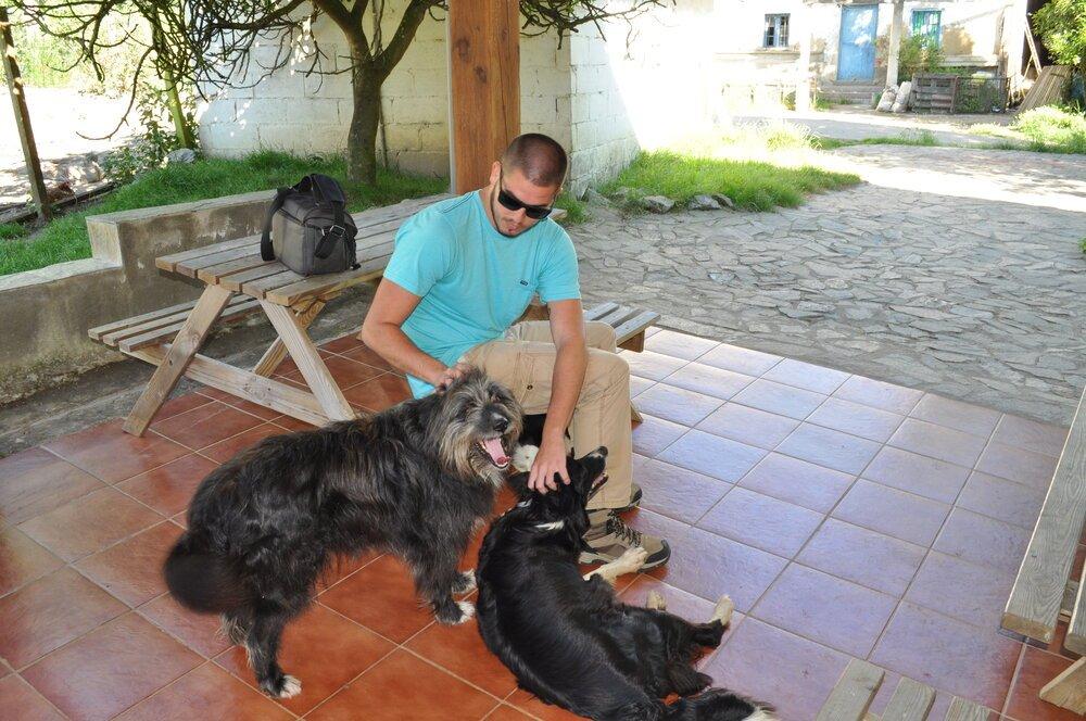 Los perros pastores buscando caricias. Foto: Pamy Rojas