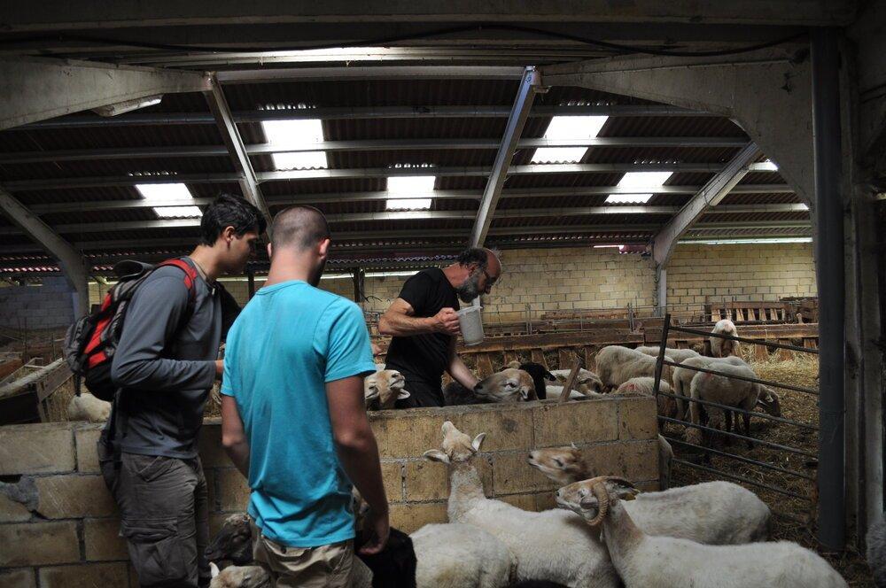 En el granero con las ovejas. Foto: Pamy Rojas